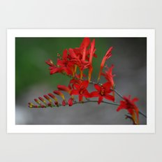Red Flowers 3 Art Print