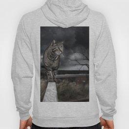 Eerie Cat Hoody