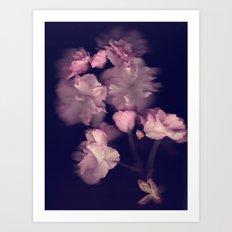 flowers shadow Art Print