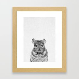 Chinchilla Framed Art Print