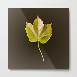 Autumn Citrus Leaf Series Metal Print
