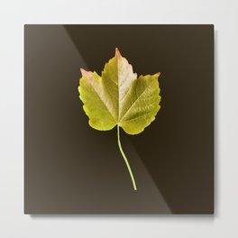 Autumn Citrus Leaf Series Metal Print
