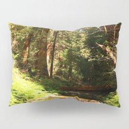 A Muir Woods Scene Pillow Sham