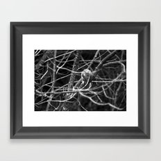 Squirrel in Black and White Framed Art Print