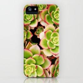 Summer Succulents II iPhone Case