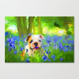 Bulldog and Bluebells Canvas Print