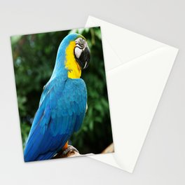Parrot Trooper Stationery Cards