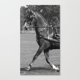 Pulling the Carriage Canvas Print