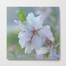 Almond tree flower blooming Metal Print