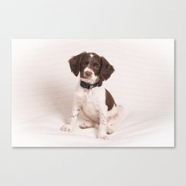 Brittany Puppy Sitting Canvas Print