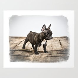 French bulldog puppy Art Print