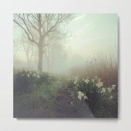 Daffodils in the mist Metal Print