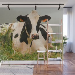 Holstein cow facing camera Wall Mural