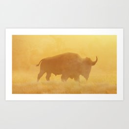 Wild Sunset (Profile of Buffalo) Art Print