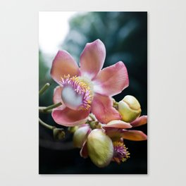 Flower of a Tree Canvas Print