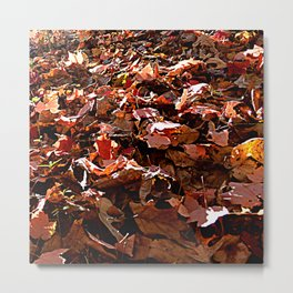 fall leaves 4 Metal Print