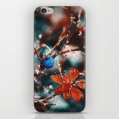 Blueberry Fall iPhone & iPod Skin