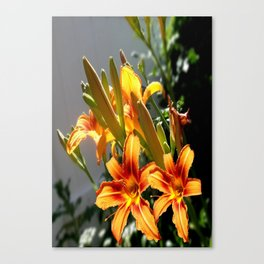 Orange Day Lilies & Buds  Flower Garden Canvas Print