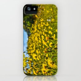 Mylor Walk - Yellow Hawkweed Flowers  iPhone Case