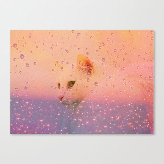 White Cat, rainy Day Canvas Print