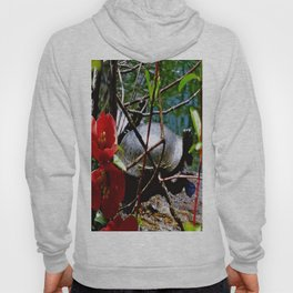 Quince and Turtle Hoody