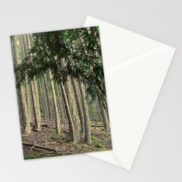 WARM AUTUMN EVENING FOREST Stationery Cards