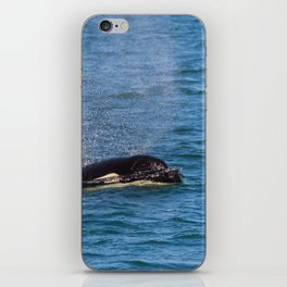 A Killer Whale in the San Juan Islands, WA iPhone Skin