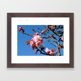 Pink Flowers II Framed Art Print