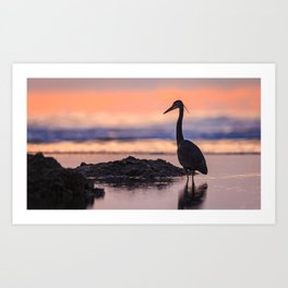 A Great Blue Heron Sunset at Cape Cove Beach Cape Perpetua, Oregon Art Print