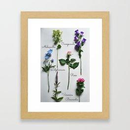Botanical photography, summer flowers Framed Art Print