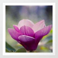 magnolia Art Prints featuring magnolia by Sharon Mau