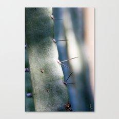Needles I Canvas Print