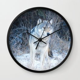 Grey Wolf in the Canadian Rocky Mountains Wall Clock
