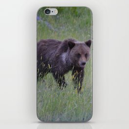 Grizzly cub learns to hunt iPhone Skin