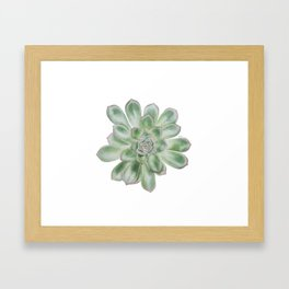 Echeveria Pulidonis, succulent power Framed Art Print