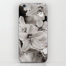 Little Whites ~ No.2 iPhone & iPod Skin