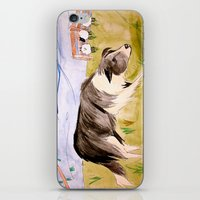 border collie iPhone & iPod Skins featuring Border Collie by Caballos of Colour