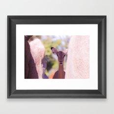 Eland Framed Art Print