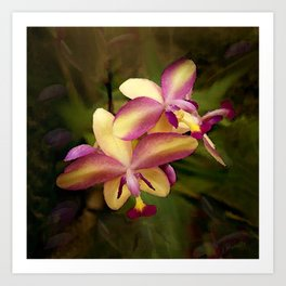 Hawaiian Sunrise Orchid Art Print