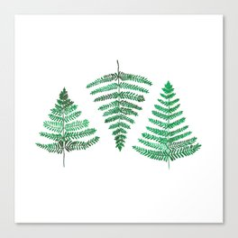 Fiordland Forest Ferns Canvas Print