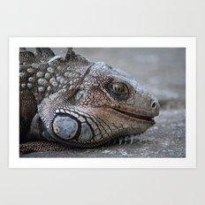 Green Iguana close up Art Print