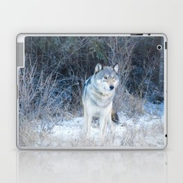 Grey Wolf in the Canadian Rocky Mountains Laptop & iPad Skin