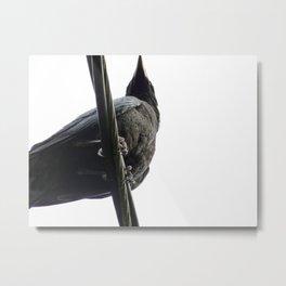 Crow on White Metal Print