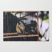 Bird, Bali Canvas Print