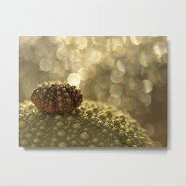 Sea Urchin Photograph... Metal Print