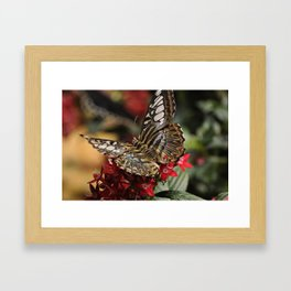 Fruit Moth Framed Art Print