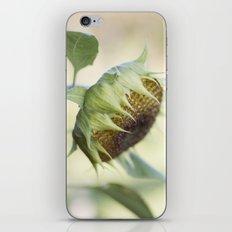 Seed Head iPhone & iPod Skin