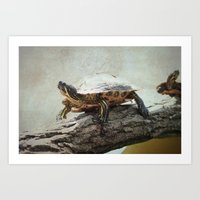 turtle Art Prints featuring turtle by Tanja Riedel