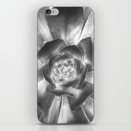 A Spiral of an Opening Succulent iPhone Skin