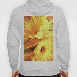 Daffodils In Spring Hoody